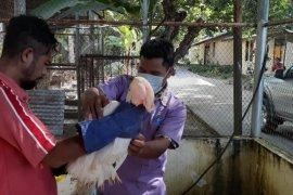 BKSDA Maluku terima satwa liar dari PPS Tasitoki