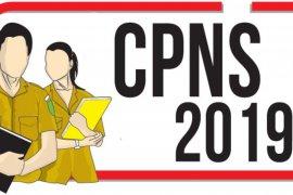 687 pelamar CPNS Bengkulu lolos seleksi administrasi