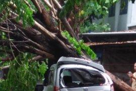 Angin kencang terjang Kediri, sejumlah kendaraan rusak tertimpa pohon