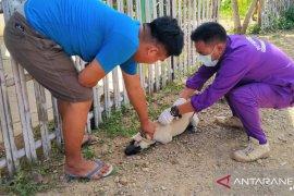 Dinkes: 75 warga Mukomuko digigit hewan penular rabies