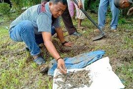 Warga Babalan Langkat temukan ratusan butir peluru aktif