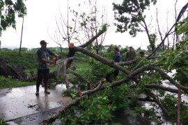 Puluhan pohon tumbang akibat diterjang angin kencang  di Kudus