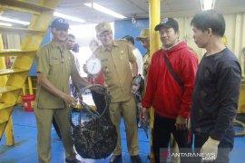 Ekspor ikan kerapu  dari Belitung ke Hong Kong 90 ton