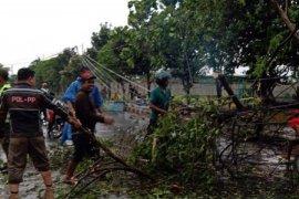Sejumlah pohon di Kediri tumbang diterjang angin kencang