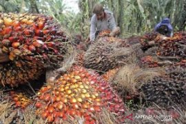 Lawan diskriminasi minyak sawit, Indonesia gugat Uni Eropa ke WTO