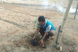 Dukung program konservasi lahan, Petani Lebak kembangkan buah-buahan