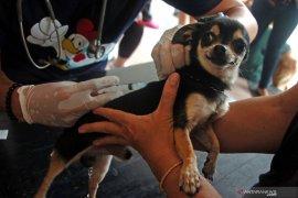 Di Mukomuko, 30 orang kena gigitan hewan penular rabies