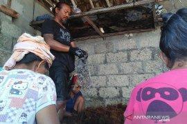 Petani Nusa Penida-Bali kembali bergairah budidayakan rumput laut