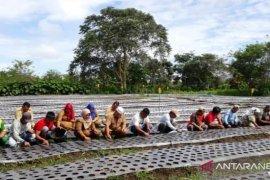 Pemprov Sumut kembangkan budidaya bawang merah di Tapsel