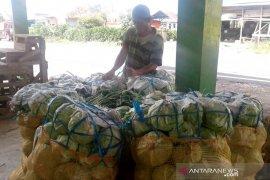 Produk pertanian Rejang Lebong masih tinggi kandungan residu kimia
