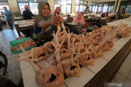 Harga daging ayam Rp23 ribu/kg di Bengkulu
