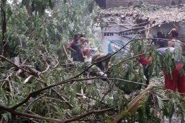 Sejumlah bangunan di Kediri rusak tertimpa pohon tumbang