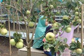 Pemkab Rejang Lebong integrasikan kebun kopi dengan apel