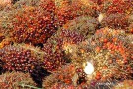 Harga TBS kelapa sawit Kaltim mengalami kenaikan