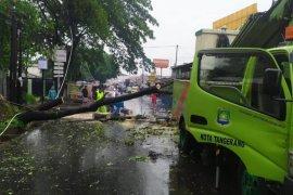 Petugas tebang pohon   tua rawan tumbang di Kota Tangerang