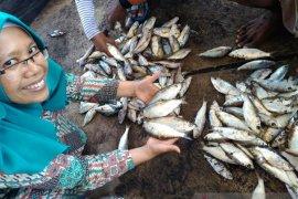 Pakar pangan Unej bagikan tips mencegah keracunan ikan tongkol
