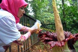 LIPI tegaskan Kebun Raya Bogor tetap jaga fungsi riset dan konservasi
