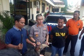 Polisi tangkap kolektor satwa yang dilindungi