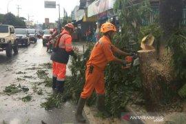 BPBD: Waspadai ancaman pohon tumbang di Kota Tasikmalaya