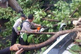 Sebuah mobil tertimpa pohon tumbang di Sidoarjo, pengemudi terluka