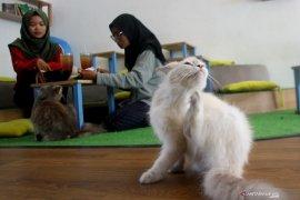 Bisnis kafe kucing di Malang