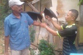 BKSDA Maluku amankan seekor burung julang Papua