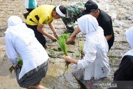 Dedi Mulyadi ajak menanam padi bernutrisi sebagai upaya cegah stunting