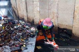 Petugas temukan ikan koi ditumpukan sampah sisa banjir