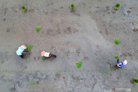 Kementan dukung BUMN cetak lahan rawa untuk pertanian