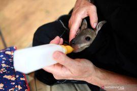 Hujan deras bawa harapan atasi kebakaran hutan Australia