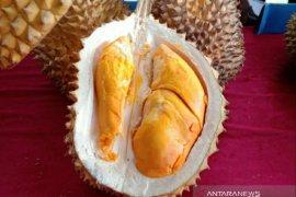 Cita rasa durian Babel terbaik di dunia