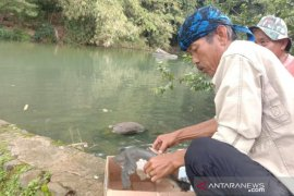 Relawan ProBumi selamatkan dan lepasliarkan kura-kura moncong babi