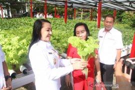 Bupati Karolin ajak masyarakat budidayakan sayuran hidroponik