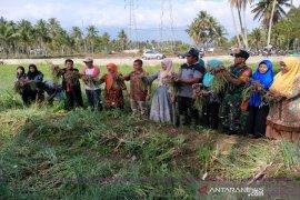 Lahan sempit di Desa Lumban Pasir produksi 2,1 ton bawang merah