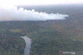 Luas hutan dan lahan yang terbakar di Riau turun 99 persen