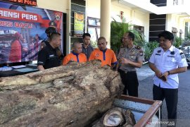 Polres Batu tangkap dua penjual kayu hasil pembalakan liar