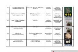 Daftar nama zat NPS yang sudah teridentifikasi di Indonesia Tahun 2019 Page 9 Small