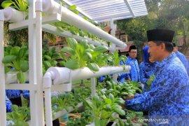 Panen pokchoi hasil hidroponik di Kota Tangerang