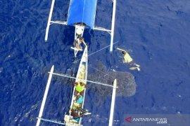 Hiu paus kembali ke pantai Botubarani-Gorontalo