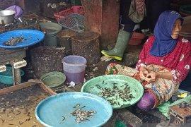 Pedagang belum mengetahui peraturan larangan penjualan anak ikan