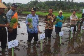 Petani Sawah Namang gunakan MA11 untuk meningkatkan produksi