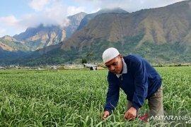 Pakar ingatkan perlunya pengembangan bawang putih secara optimal di Tanah Air