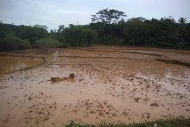 Pembangunan irigasi pertanian difokuskan pascabanjir Lebak