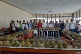 Distan Kalbar jaring potensi durian unggul lokal Sanggau