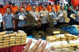 5 hektare ladang ganja di Madina Sumut hasilkan 60 ton ganja