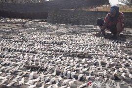 Tangkapan melimpah, harga ikan asin turun di Aceh Timur
