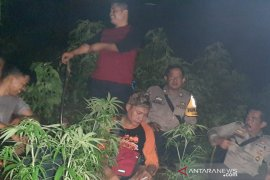 Polisi jaga ketat lokasi ladang ganja di Gunung Guntur