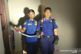 Warga temukan ular kobra satu meter di Kebon Jeruk Jakarta Barat
