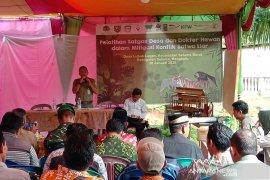 Habitat harimau sumatera di Bengkulu terus menyempit