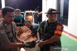 Seorang pencari kayu tewas diterkam harimau di Riau